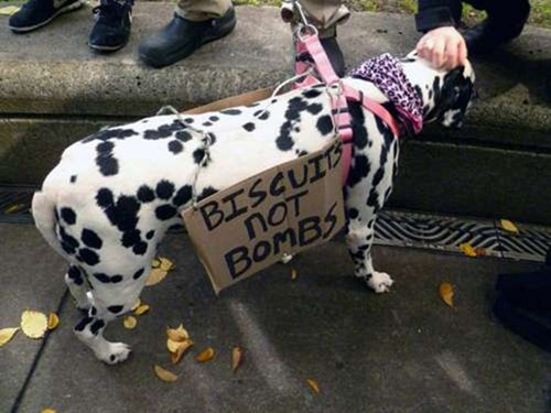 cute-pets-at-occupy-wall-street-22