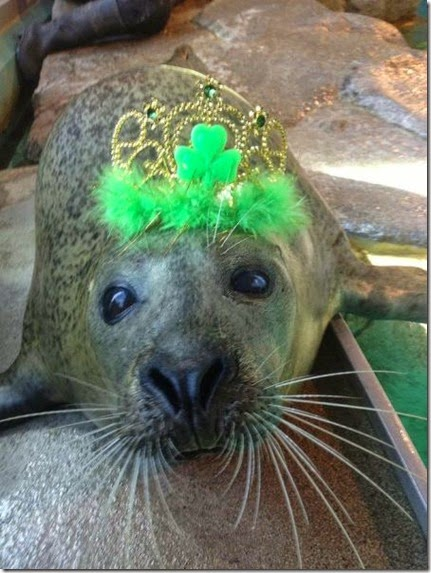 animals-st-paddys-day-004