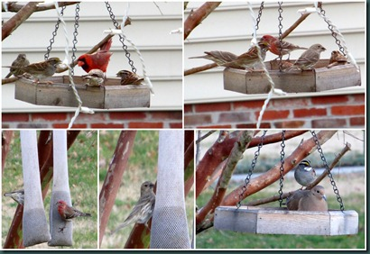 feeder visitors