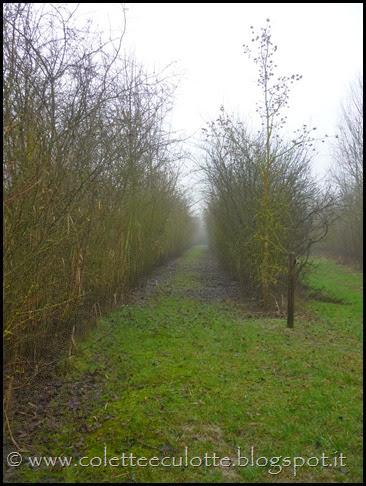 Passeggiata al Dosolo - 17 febbraio 2014 (19)