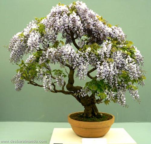 bonsais arvores em miniatura desbaratinando (59)