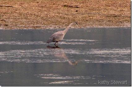 One heron