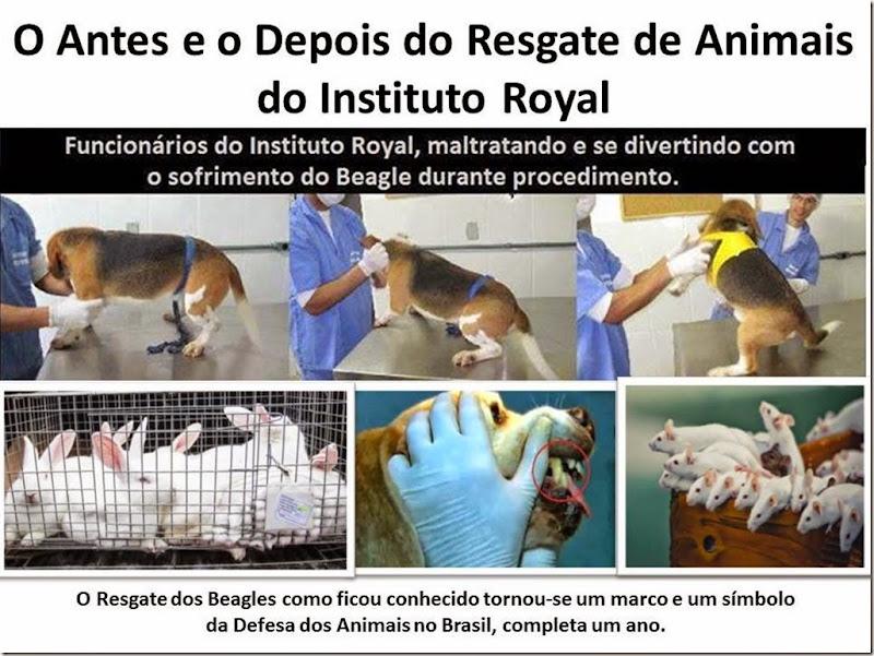 Resgate-Royal (1)