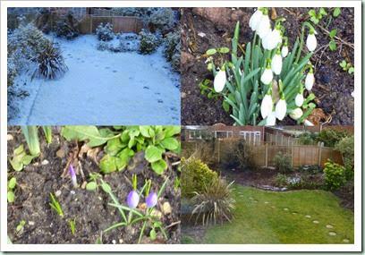garden feb 2015
