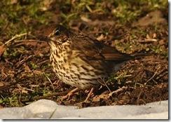 Bradgate Park D300s X2  11-02-2012 15-13-49