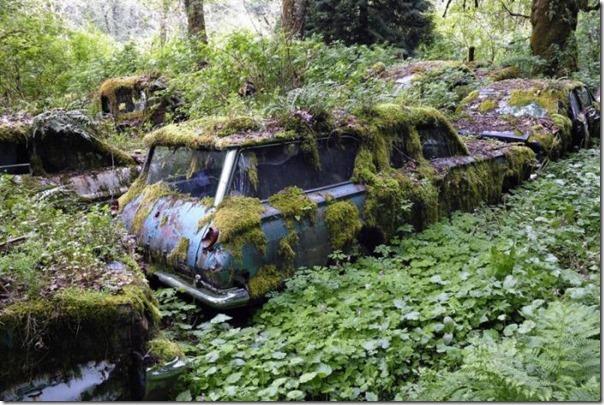 Cemitério de carros na floresta (19)