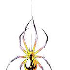 spiders-14.jpg