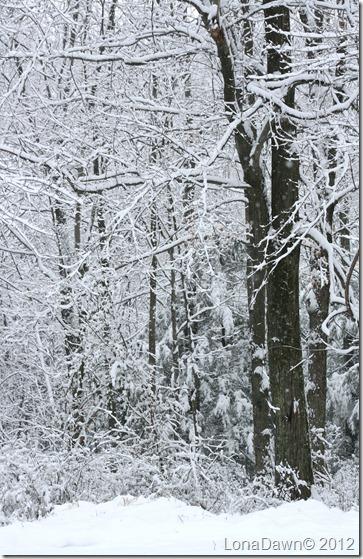 Woods2_Dec292012