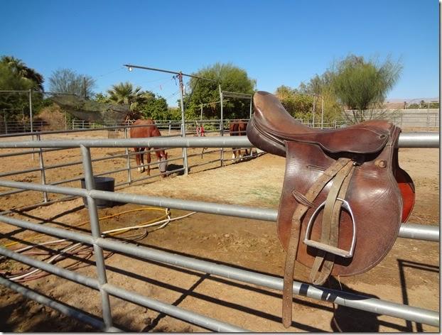 Epona Horse 071
