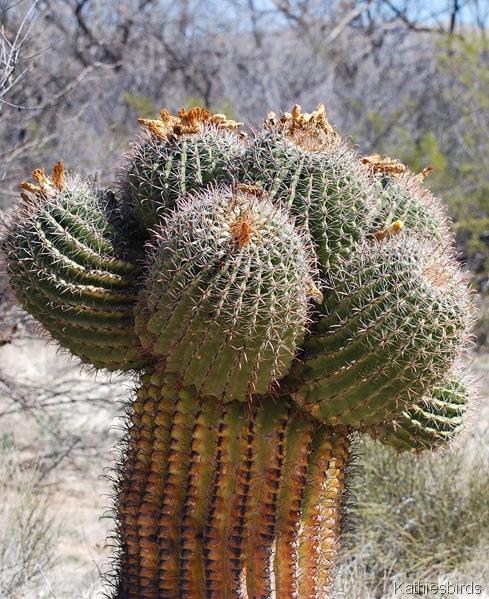 7. cactus-kab