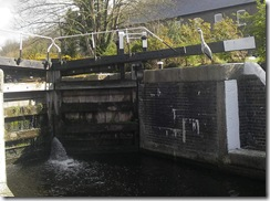 heron at Coppermill lock