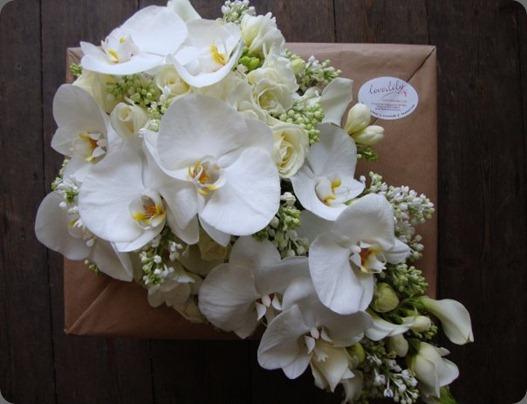 23633_340469661991_900455_n ,love lily