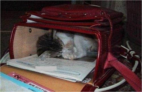 Cats Will Sleep Anywhere 12