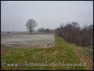 Passeggiata sull'argine dopo la piena - Padulle - 11 gennaio 2014 (24)