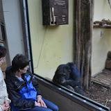 Heidelberger-Zoo_2012-04-09_814.JPG