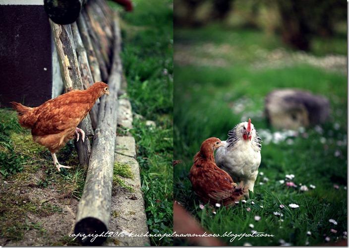 Ptaki mojej mamy7