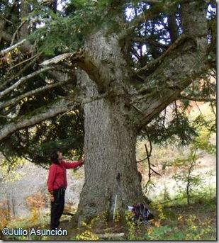 Gran abeto - Selva de Irati