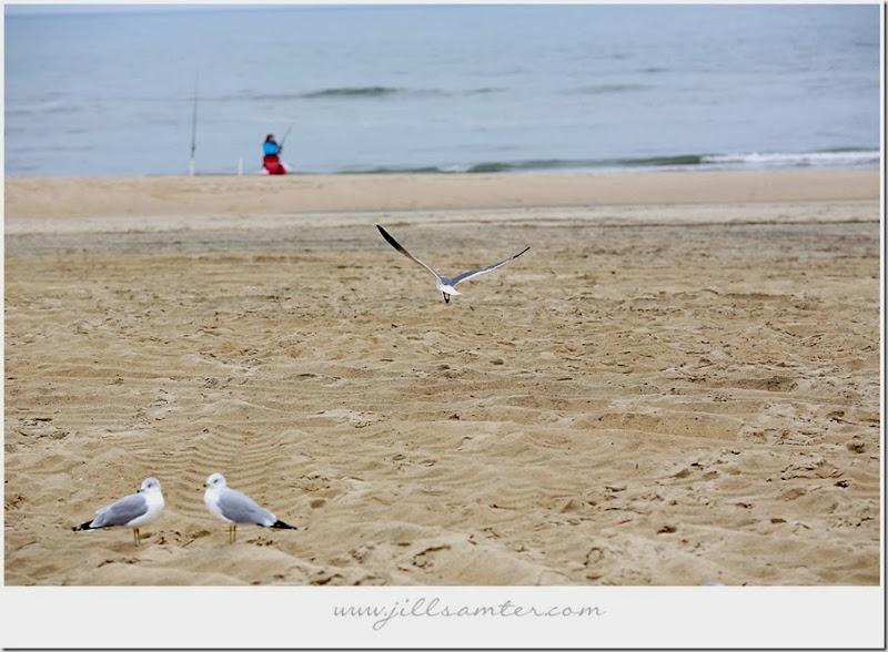 birdlanding