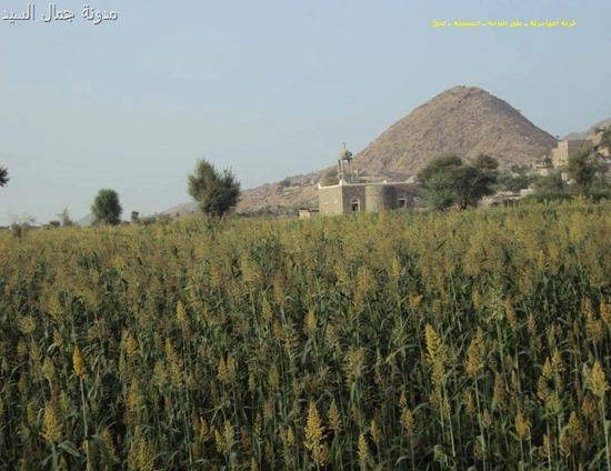 قرية أمهاجرية ــ طور الباحة ــ الصبيحة