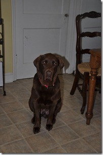 gus update still begging 040813 (3)