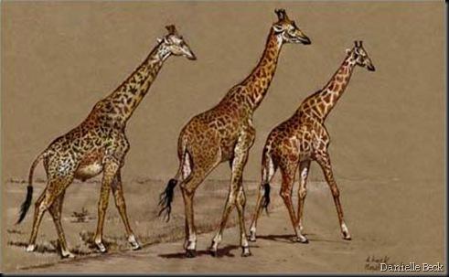 Danielle Beck. Girafes