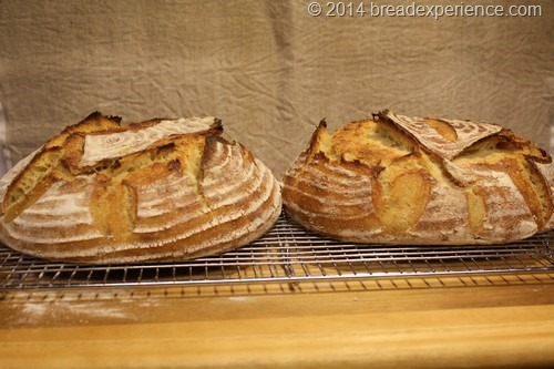 KAMUT Pain Au Levain cooling on rack