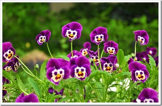 funny_flower_garden_1920_x_1200_562