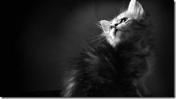 pisică-fundal-negru