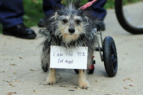 cute-pets-at-occupy-wall-street-06
