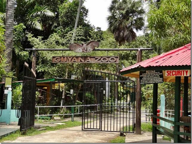 Guyana_Zoo_DSC07043