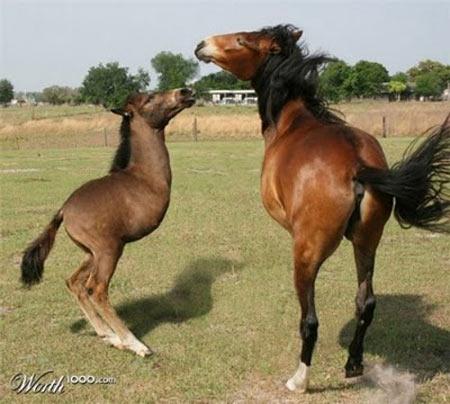 Ngựa 01