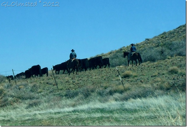 01 Cowboys herding cattle adjacent to SR89 Peeples Valley AZ (1024x695)
