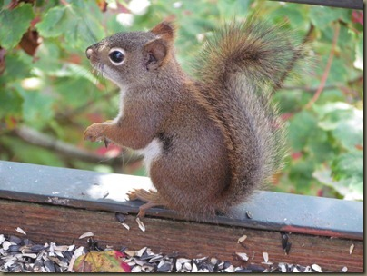 Grandfather mountain cute squirrell