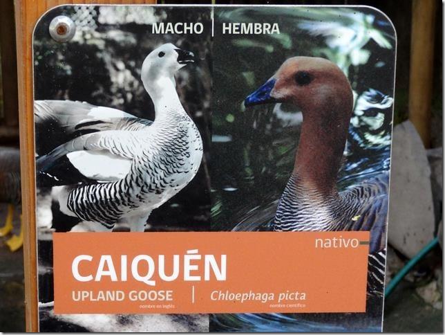 Santiago_Zoo_DSC03878