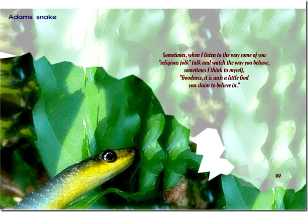adams snake-003