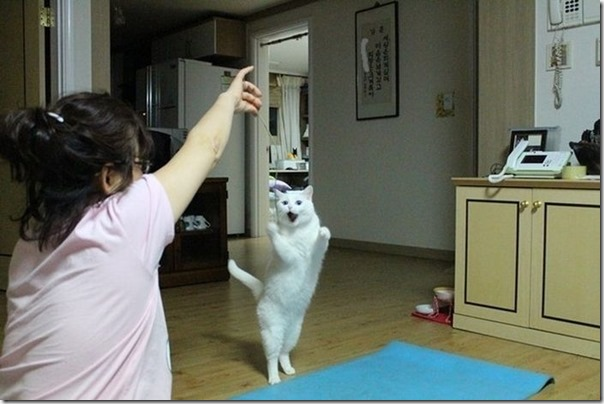 Gatos Felizes (11)