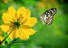 imagens-de-flores-1040