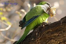 Cotorra-aves en peligro de extinción
