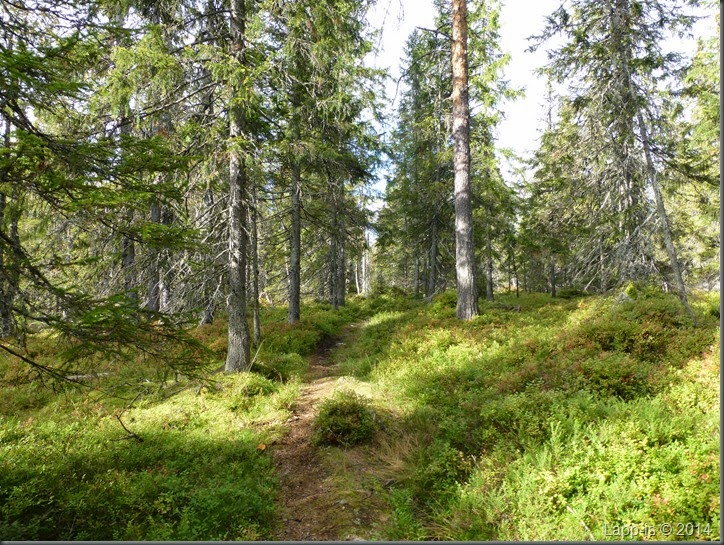 Råsjøen 022