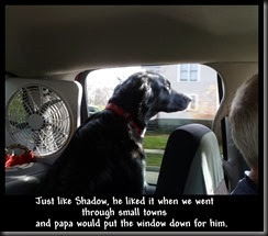 Just like Shadow, he liked it when we went<br />             through small towns <br />and papa would put the window down for him.