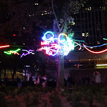 neon lights on tree in Toronto, Ontario, Canada