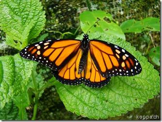 110528 X Schmetterlingsfarm (6)