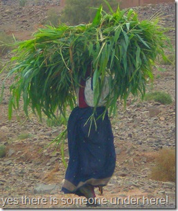 Carrying home the greenery