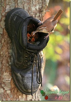 boot as nest