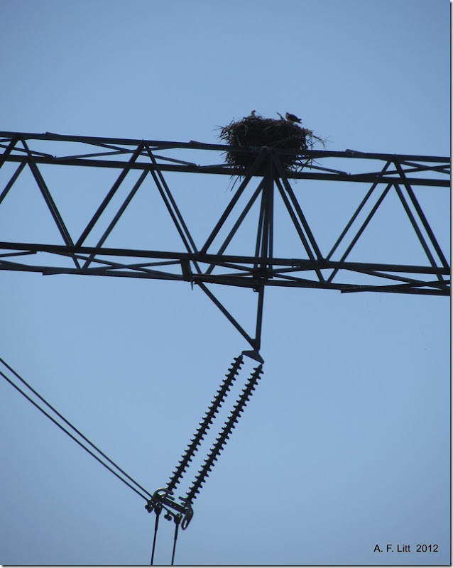 Osprey Nest.  Duvall, Washington.  August 15, 2012.  Photo of the Day by A. F. Litt:  September 12, 2012.