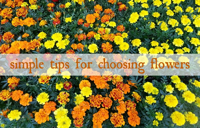 Simple Tips for Choosing Flowers for a Vertical Garden (or flower garden)