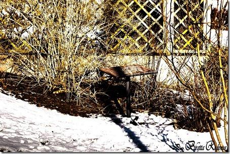 hdr_20120210_birdstable