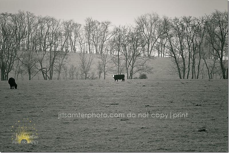fog-5457