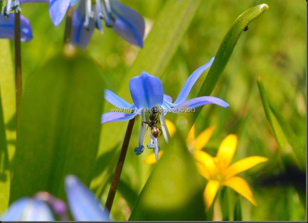 makro kukkia 111