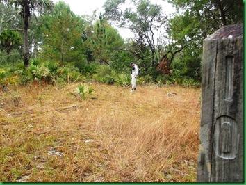 Pat's Island Trail 067